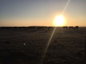 stampede-ranch